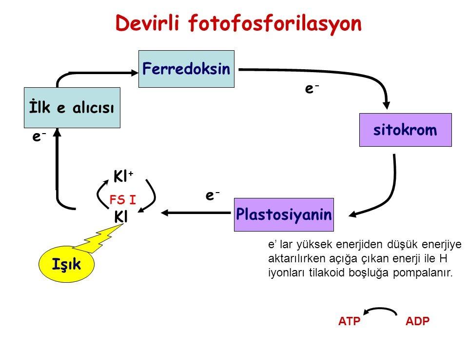a diftillobotriasis természetes fókuszának összetevői)