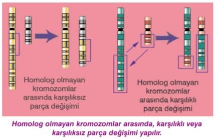 Gen mutasyonları, kromozomların sayısı ve yapısındaki değişikliklerle ilişkilidir 7
